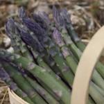 asparagus-sweet-purple